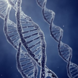 DNA double helix molecules and chromosomes.